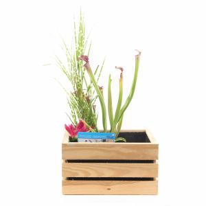 Mini vijver in houten kistje blank