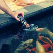 Visvoer